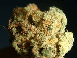 Buy amnesia haze online-amnesia haze for sale-buy Cheap Weed online